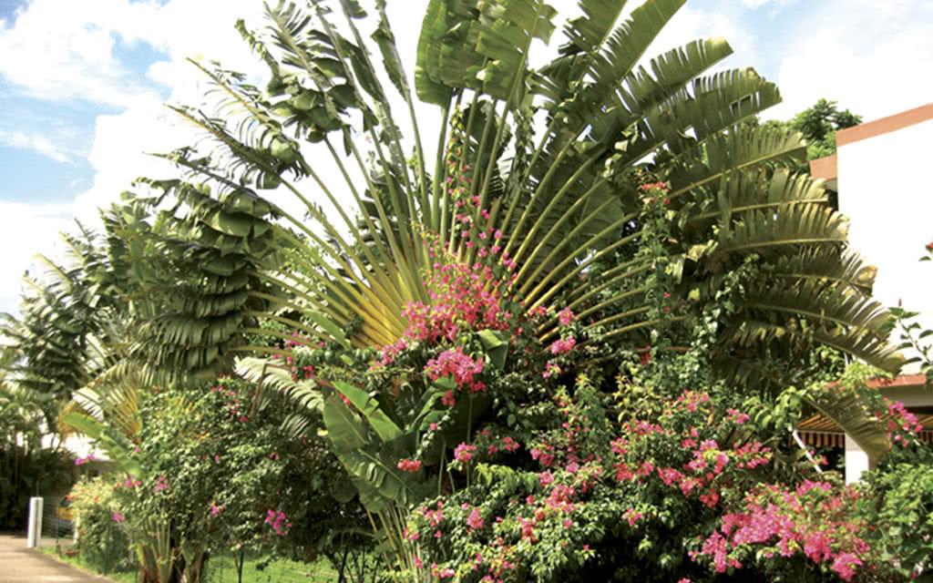 12 fleursdiles amb1