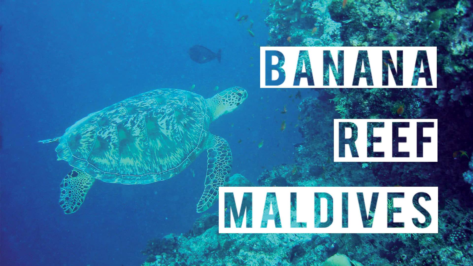 Plongée Sous Marine à Banana Reef Aux Maldives