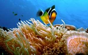 Des fonds marins spectaculaires