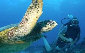 La plongee en bouteille pour nager avec les tortues et autres animaux aquatiques