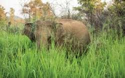 Safari national park