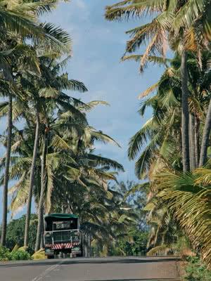 Allée de palmiers