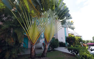 jardin guadeloupe caraibes