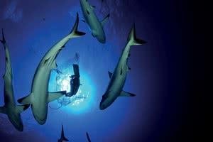 Bora : Observation Requins + Lagoonarium