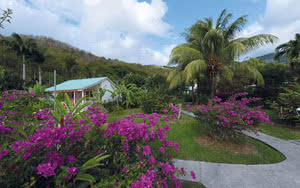 jardin fleurs des iles guadeloupe