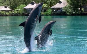 Moorea Dolphin Experience
