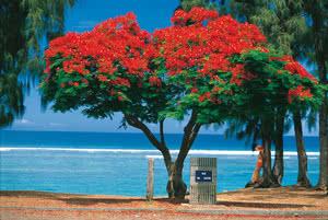 COMBINÉ 2 ILES RÉUNION + ILE MAURICE : Circuit De Sites En Sites STANDARD + Hôtel Coral Azur Beach Resort 14 nuits