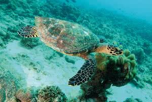 tortue de mer seychelles