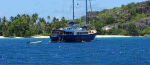 sea bird plongée dans l'eau turquoise des Seychelles