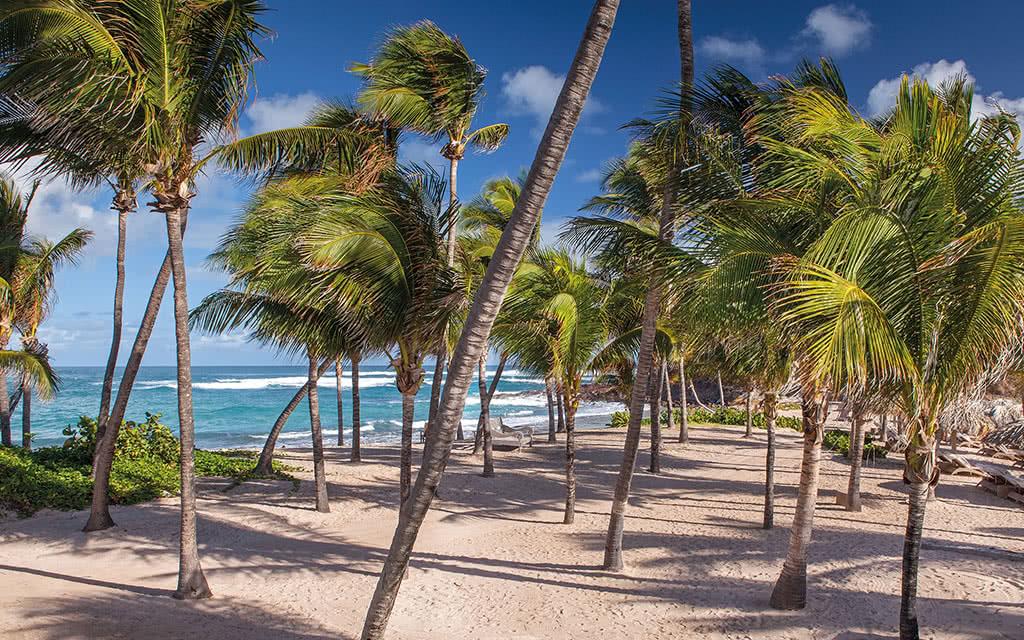 17leguanahani coconut grove 1