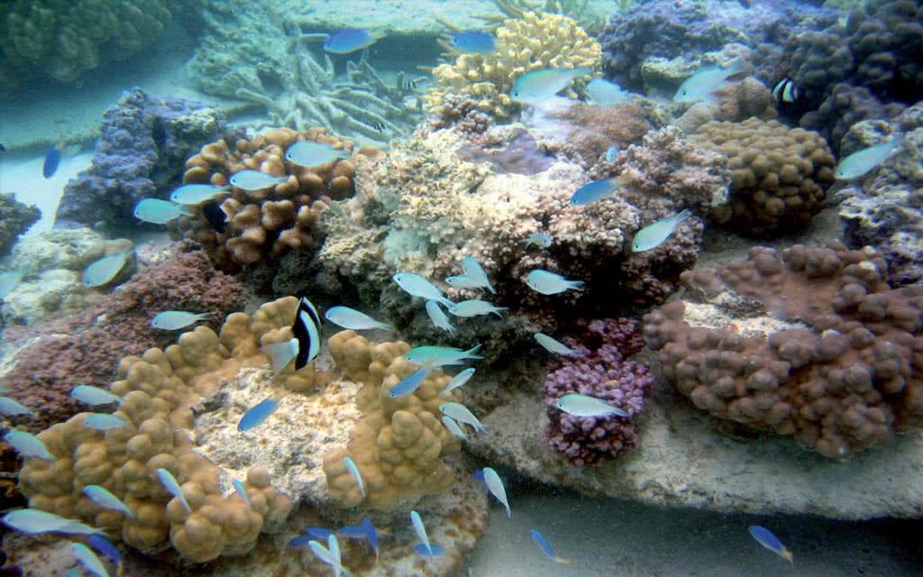 Package Manava - Excursions Tahiti, Moorea, Bora Bora