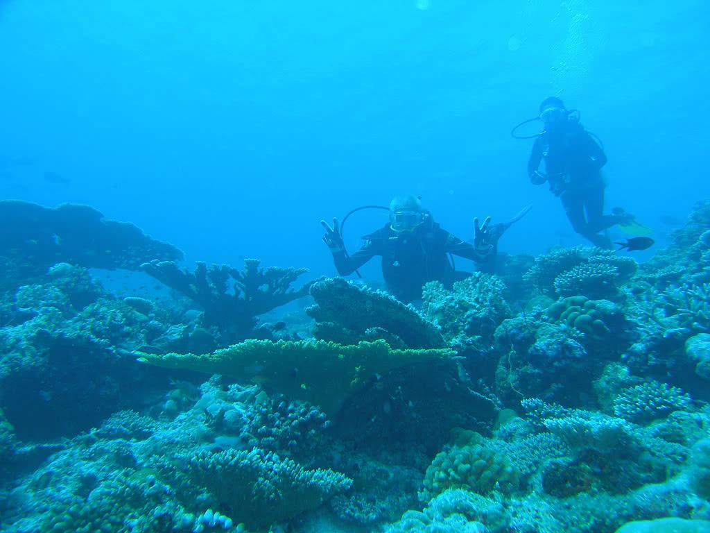 Dream Maldives Standard - 7 Nuits - Offre spéciale Noces - voyage  - sejour