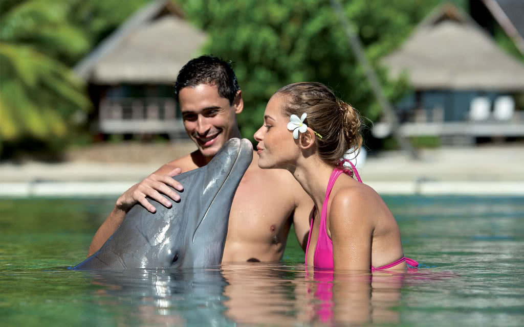 Dolphin Experience Package Romance
