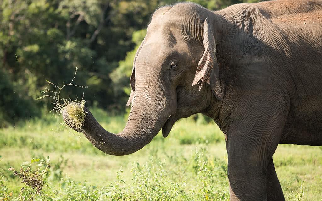 17-slk-kuadulla-elephant-xs-2