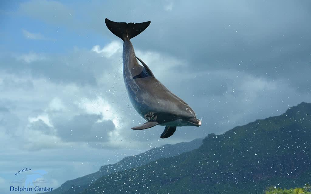 Moorea - Excursion Dolphin Experience - Programme Miti