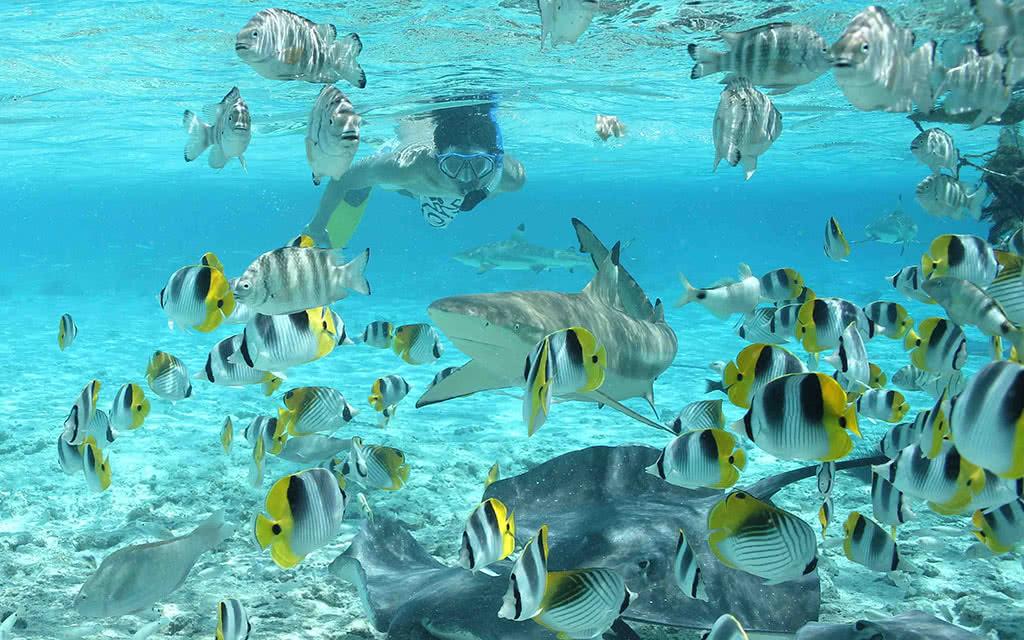 Bora Bora - Safari Requins et Raies en plongée libre