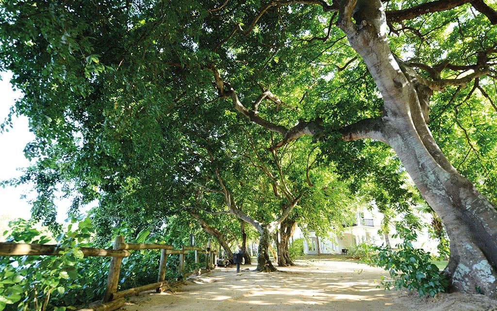 16-ravenala-jardin-2