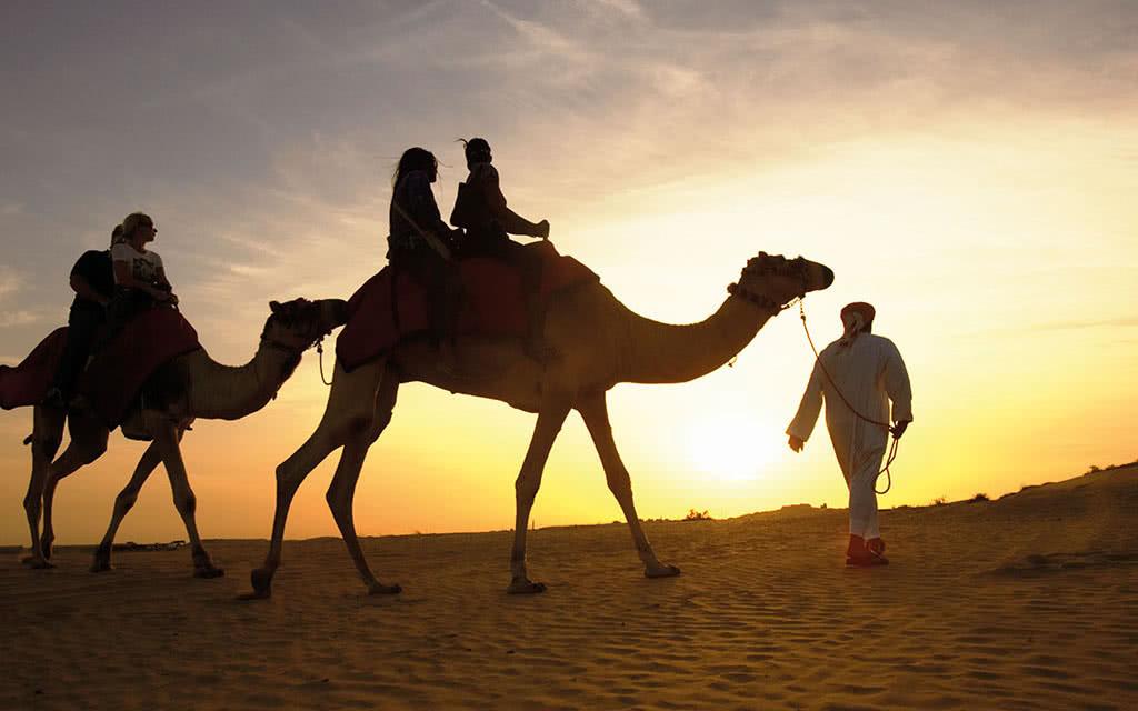 16o-omirage-camel