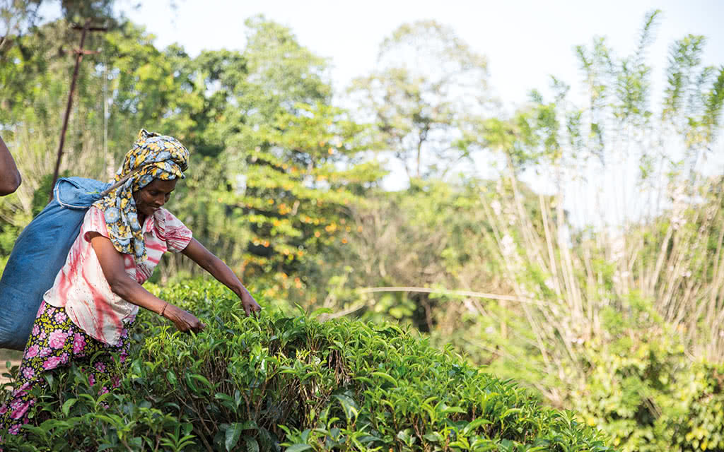 Kandy et la région du thé