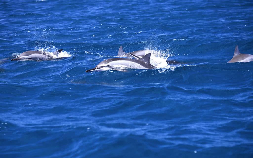 Découverte dauphins et Parc Casela